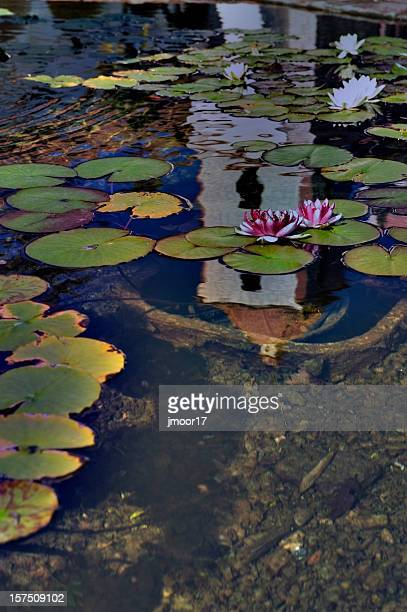 lily pond mission santa barbara - mission santa barbara stock pictures, royalty-free photos & images