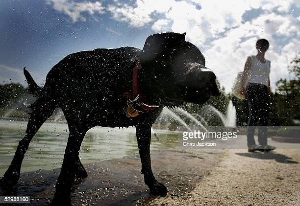 Lily the dog cools off after a dip in a lake as her owner looks on in Battersea Park May 27 London England The sunshine has been forecast to continue...