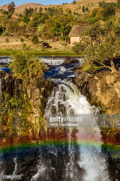 lily waterfall - pierre yves babelon madagascar stock pictures, royalty-free photos & images