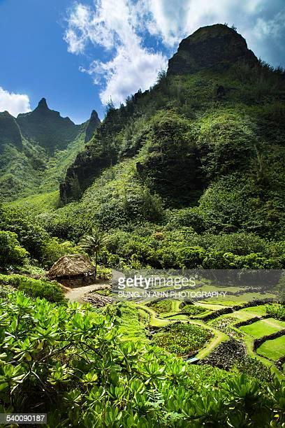 limahuli garden - kauai stock pictures, royalty-free photos & images