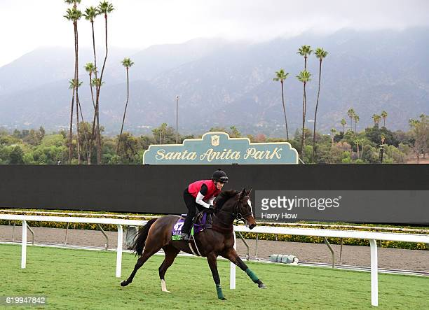 Limato during training in the Mile for the 2016 Breeders' Cup World Championships at Santa Anita Park on November 1 2016 in Arcadia California