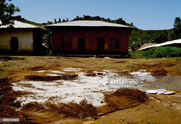 Lime covers a mass grave for villagers killed by the release of toxic gas from Cameroon's Lake Nyos In August of 1986 the lake which is located in a...