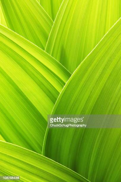 Lime green plant leaf textured wallpaper background