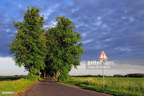 Lime Tree or Linden -Tilia- tree-lined avenue in the evening light, Mecklenburg-Western Pomerania, Germany, Europe