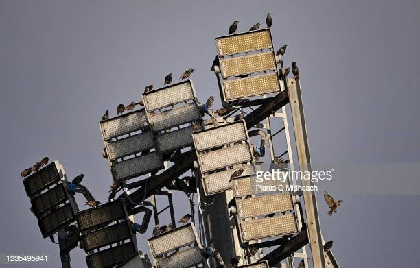 Limerick , Ireland - 25 September 2021; Birds sit on a floodlight before the United Rugby Championship match between Munster and Cell C Sharks at...