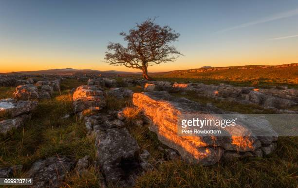 limestone glow - limestone pavement stock pictures, royalty-free photos & images