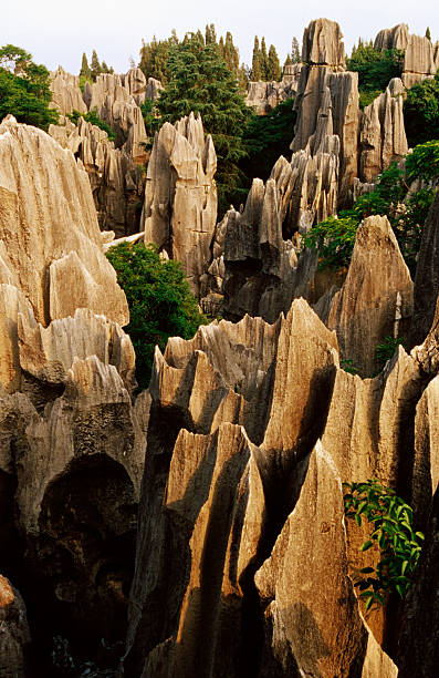 Limestone karst formations in Stone Forest, Shi Lin, Yunnan, China, North-East Asia