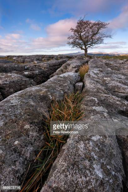 limestone lines - limestone pavement stock pictures, royalty-free photos & images