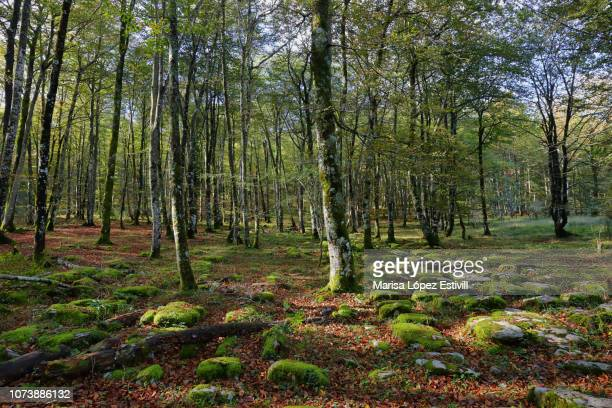 limestone pavement surface in monte santiago nature forest in spain. - アラバ県 ストックフォトと画像