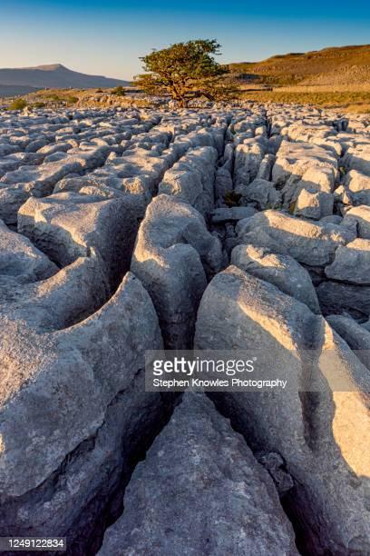 limestone pavement yorkshire dales - limestone pavement stockfoto's en -beelden