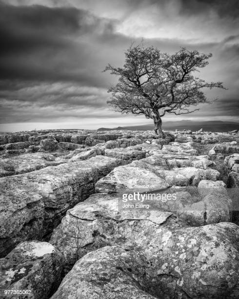 limestone pavement, yorkshire dales, uk - limestone pavement stock pictures, royalty-free photos & images