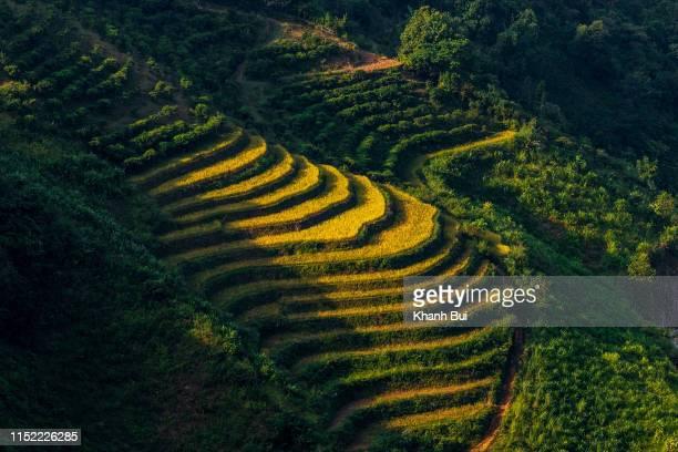 limestone plateau and terraces, a heritage's in ha giang province, vietnam - limestone pavement stockfoto's en -beelden