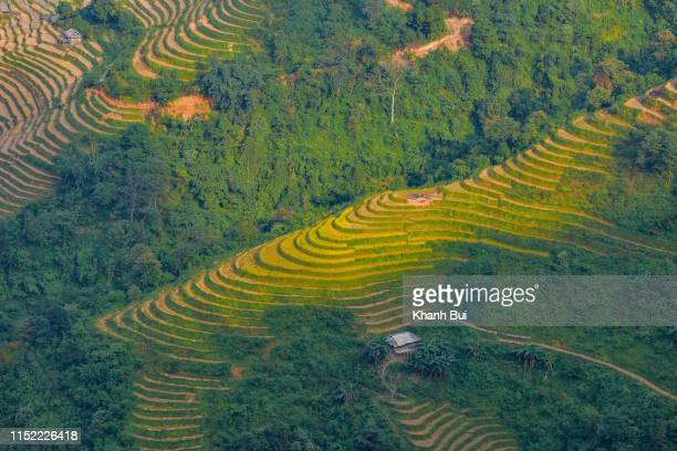 limestone plateau and terraces, a heritage's in Ha Giang province, Vietnam