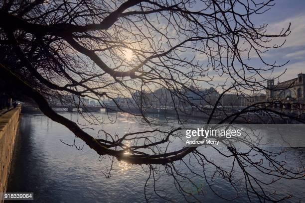 limmat river with a bare winter tree, zurich - rio limmat - fotografias e filmes do acervo