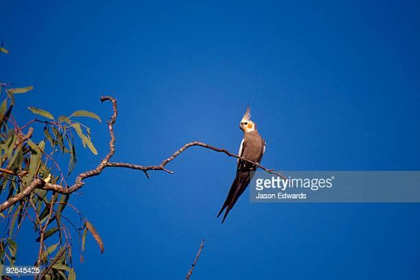 Limmen National Park, Northern Territory, Australia.
