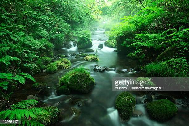 limpid stream - 鳥取県 無人 ストックフォトと画像