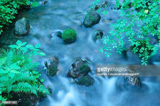 limpid stream - tottori prefecture stock photos and pictures
