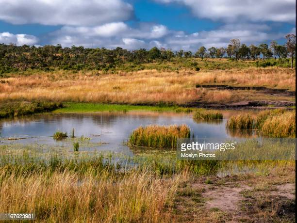 limpopo landscape - limpopo province stock pictures, royalty-free photos & images