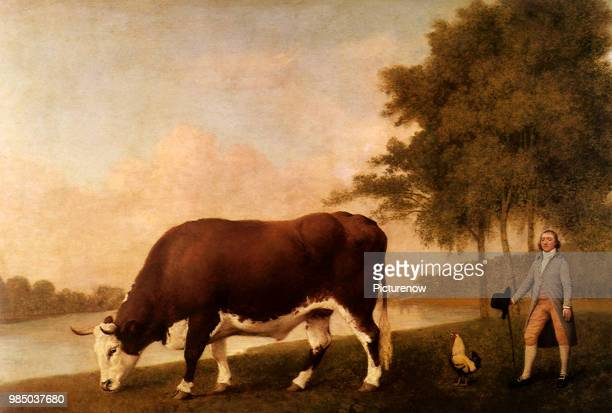 Lincolnshire Ox Stubbs George