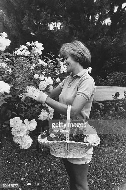 Linda Gray Sexton novelist biographer of her poet mother Anne Sexton gathering roses in a basket from bushes in her garden at home
