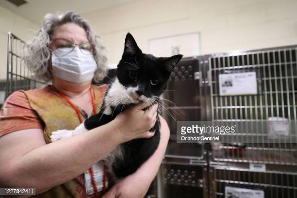 Linda Hull asistente administrativa en Orange County Animal Services administra TLC a Dali el lunes 27 de julio de 2020 Según la North American...