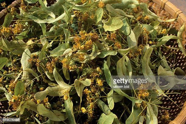 Lindenblüten Sommerlinde Tilia platyphyllos getrocknet