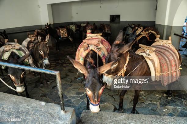 lindos village on rhodes, greece - donkey taxi - mula imagens e fotografias de stock