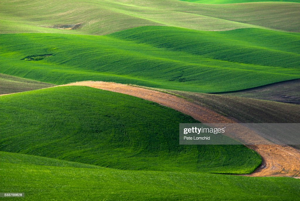 line and curve field : Foto stock