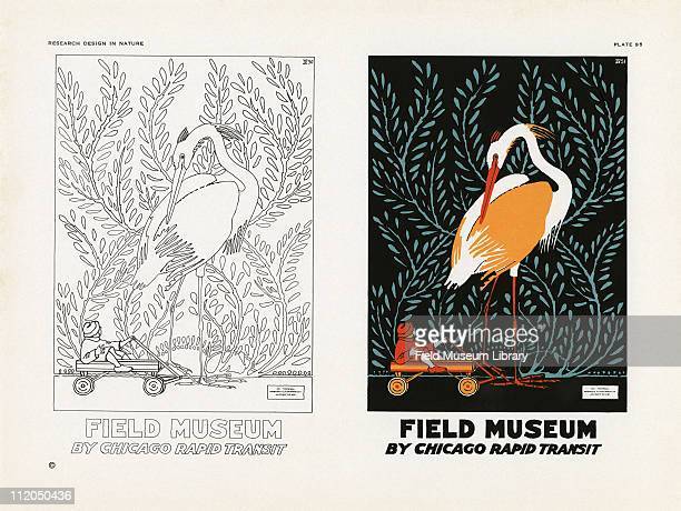 Line drawing of the Field Museum by Chicago Rapid Transit and color poster of a Sandhill Crane with a child in a wagon mid 1920s