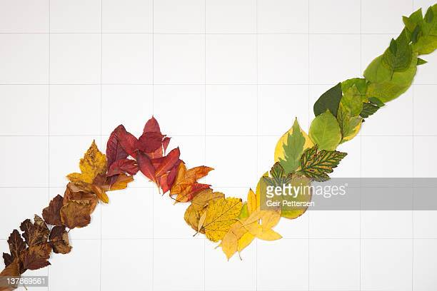 Line graph formed of 4 seasons leaves