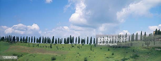 Line of cypress trees, Tuscany, Italy