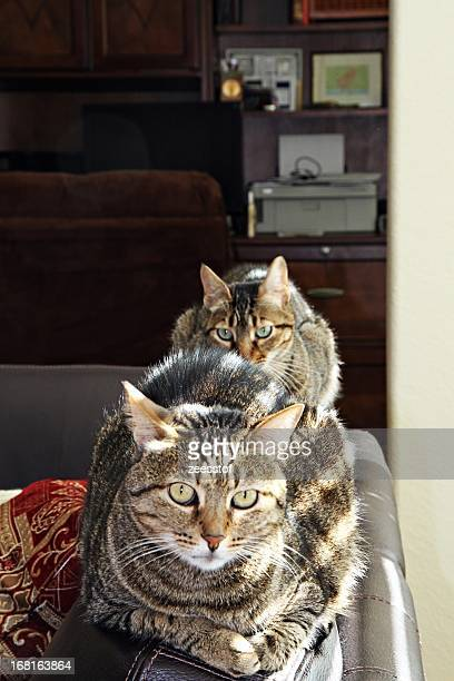 A Line of Egyptian Cats