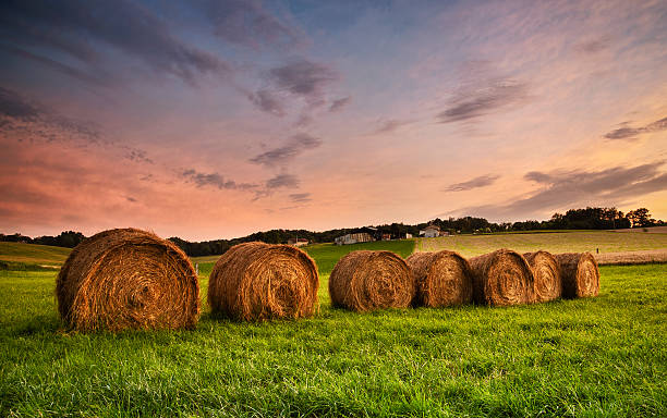 Line of hay bales at sunset