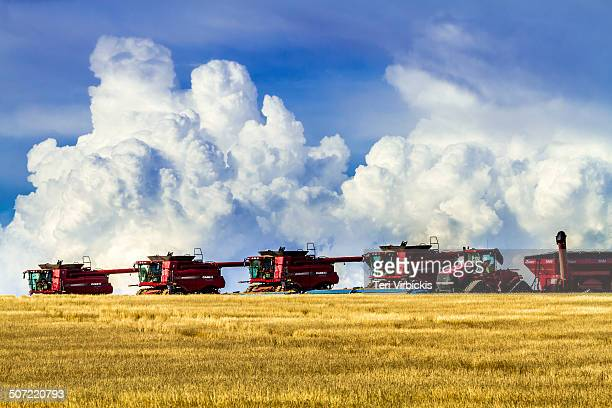 Line of large red combines harvesting wheat field on the highs plains of Colorado in front of dramatic summer storm front