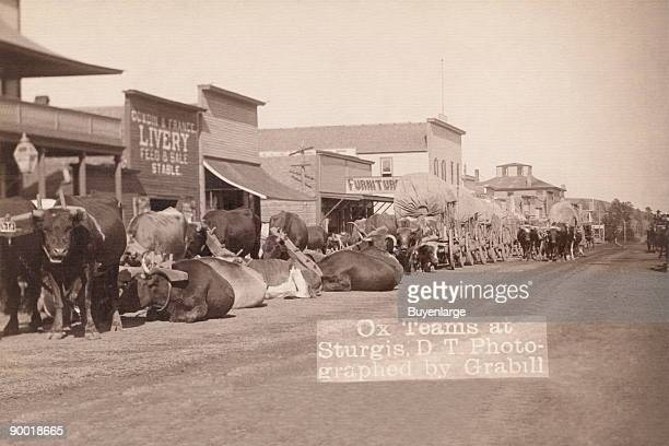 Line of oxen and wagons along main street
