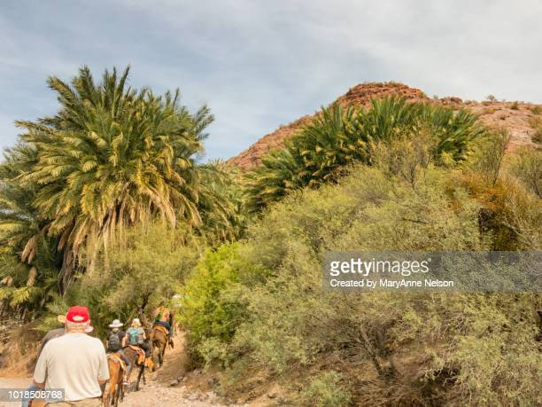 line of tourist donkey riders in baja - mexican riding donkey stock photos and pictures
