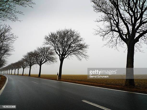 line of trees in the fog - bernd schunack stock-fotos und bilder