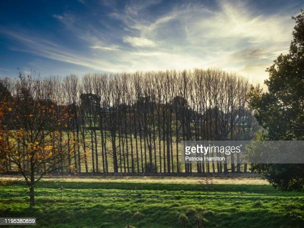 line of trees in winter - publicity event stock pictures, royalty-free photos & images
