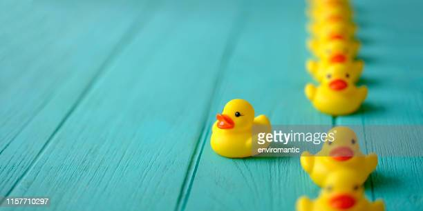 line of yellow rubber ducks, moving in an orderly line, with one yellow duck breaking ranks moving out of the line following it's own direction, set on a turquoise colored wooden grained background, conceptually representing water. - in a row stock pictures, royalty-free photos & images