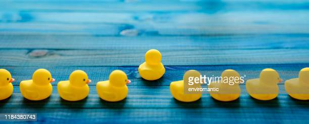 line of yellow rubber ducks, with one duck breaking away from the line moving in it's own direction, scene set on an old turquoise, blue and green colored weathered, wood grain, wooden panel background, conceptually representing water. - appearance stock pictures, royalty-free photos & images