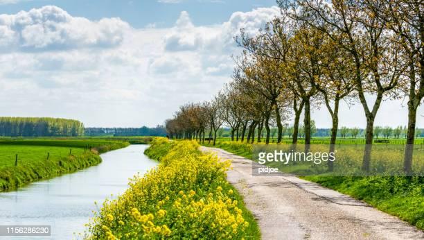 春の花の木々と並び - 干拓地 ストックフォトと画像