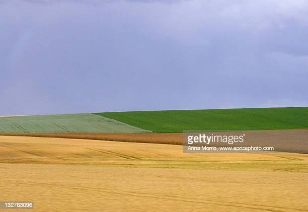 Lines and colors of fields