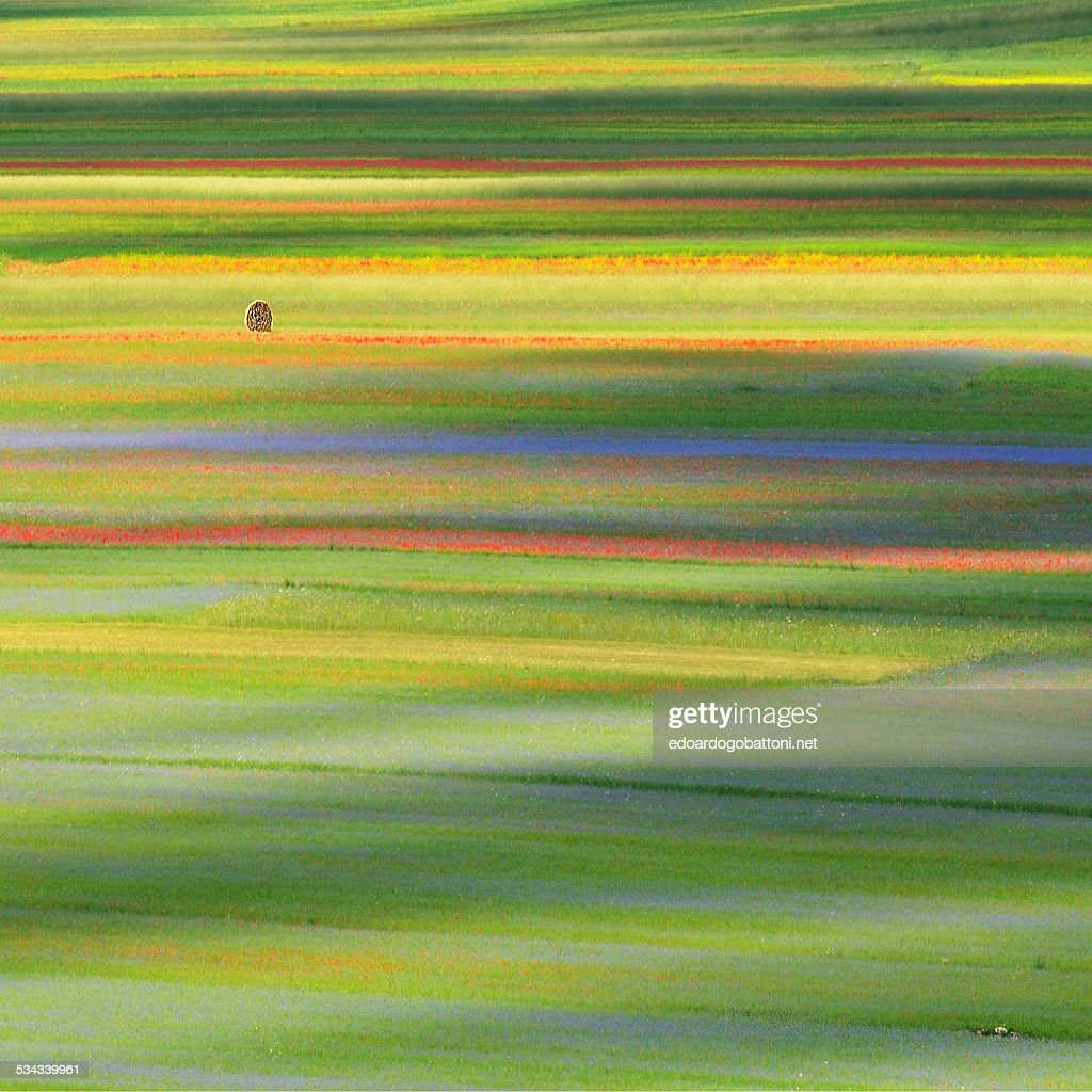 Lines and Colours : Foto stock