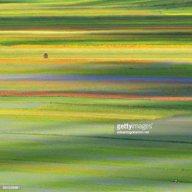 lines and colours - edoardogobattoni - fotografias e filmes do acervo