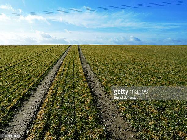 lines in a field - bernd schunack photos et images de collection