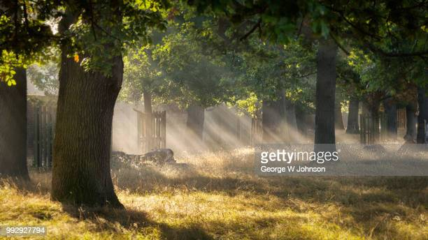 lines of light - richmond park stock pictures, royalty-free photos & images
