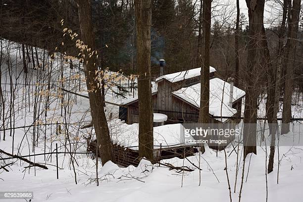 Lines of plastic tubing in a sugar bush flowing sap to a collection tank in a sugar shack