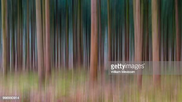 lines of trees - william mevissen stock pictures, royalty-free photos & images