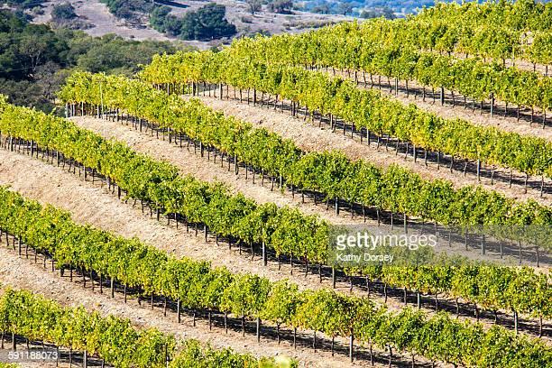Lines of Wine