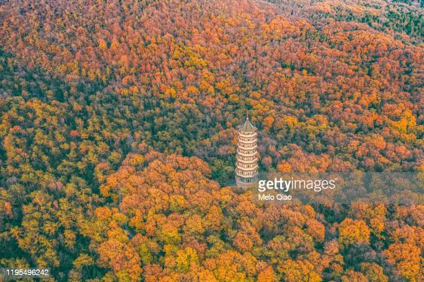 linggu tower foliage - tower stock pictures, royalty-free photos & images